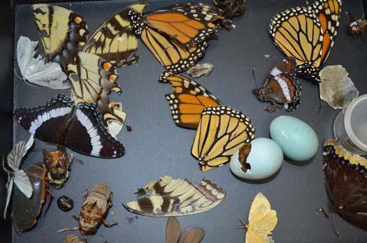 Butterfly wings at Tara Lynn Bridal
